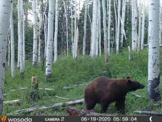 Click image for larger version  Name:Bear.2020.jpg Views:244 Size:31.2 KB ID:142431