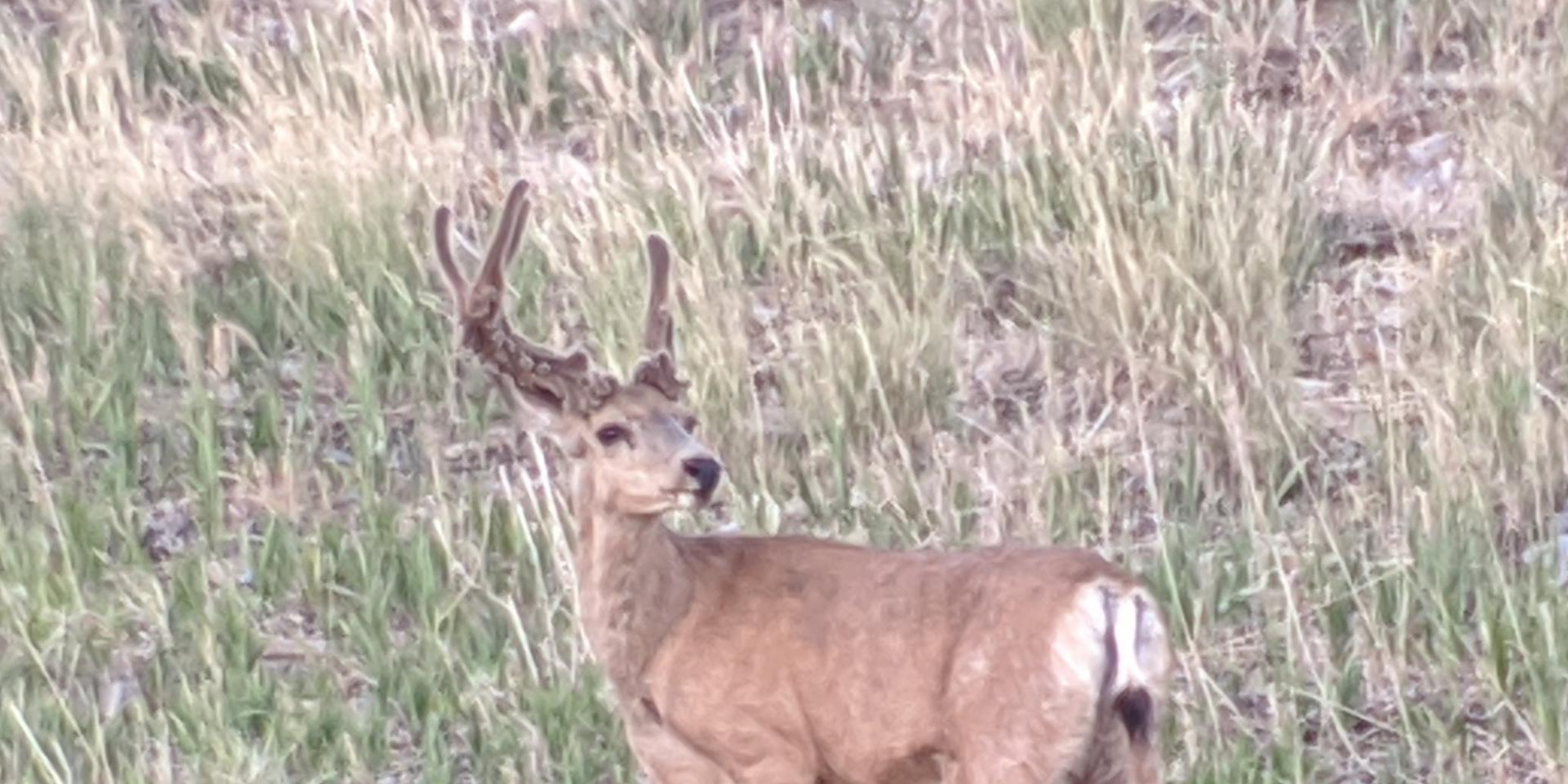 Click image for larger version  Name:Cactus Buck3.jpg Views:224 Size:197.3 KB ID:142445