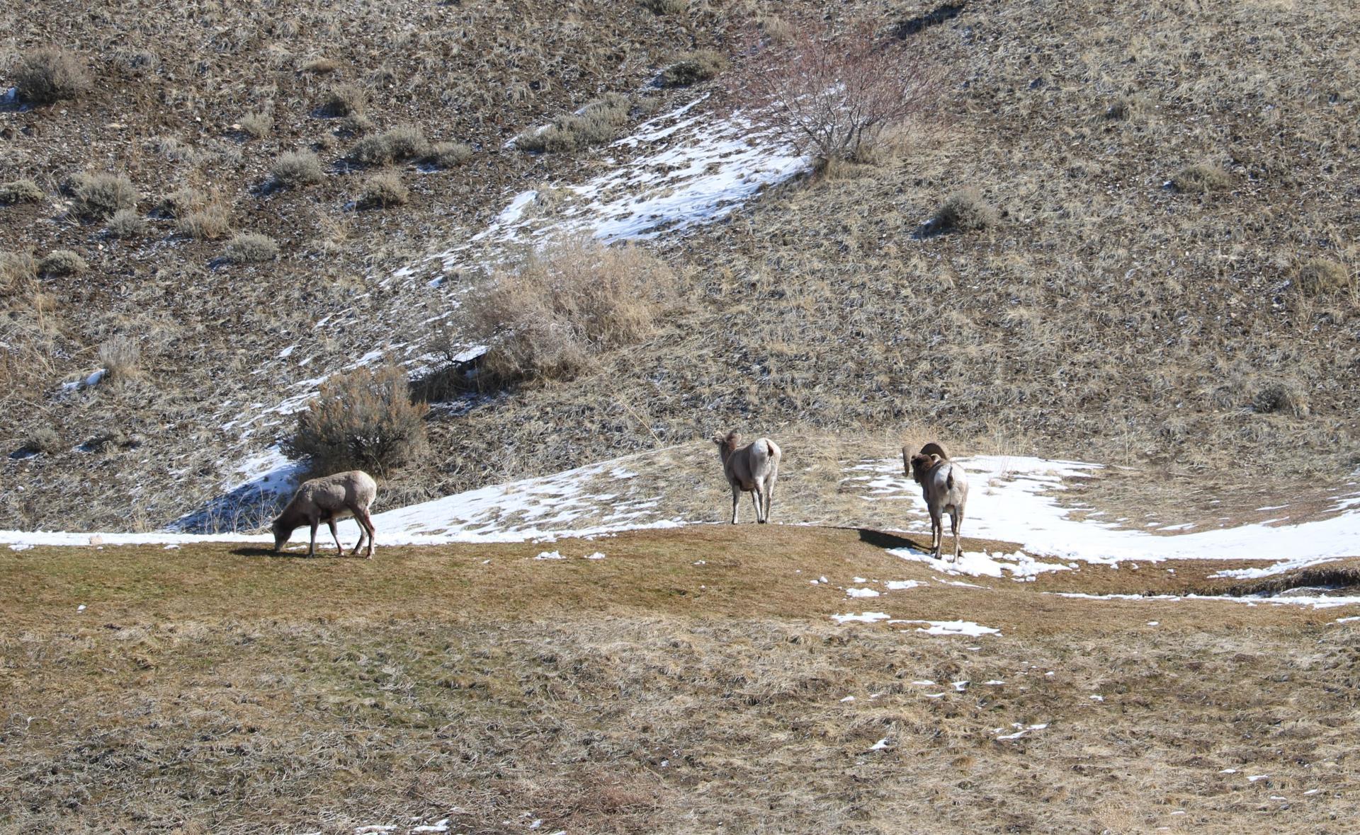 Click image for larger version  Name:Cedar Hills Sheep 4.jpg Views:57 Size:638.0 KB ID:146363