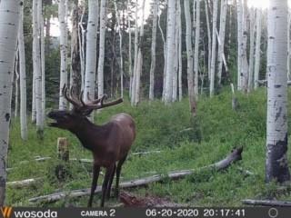 Click image for larger version  Name:elk.2020.jpg Views:262 Size:31.1 KB ID:142433