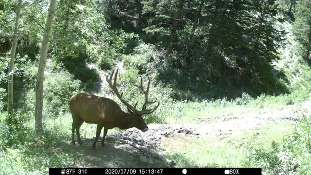 Click image for larger version  Name:elk.3.jpg Views:322 Size:109.3 KB ID:142995