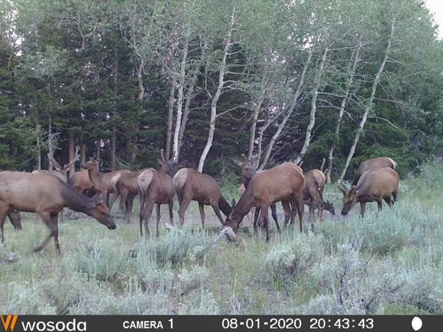 Click image for larger version  Name:elk.6.jpg Views:199 Size:120.3 KB ID:143003