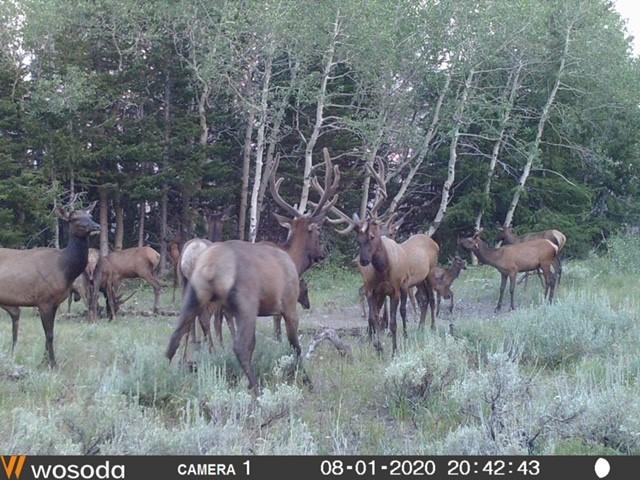 Click image for larger version  Name:elk.7.jpg Views:212 Size:120.2 KB ID:143005