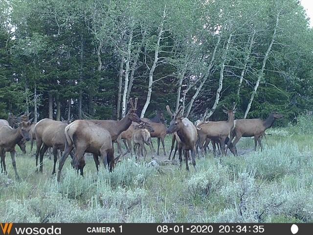 Click image for larger version  Name:elk.8.jpg Views:201 Size:141.5 KB ID:143007