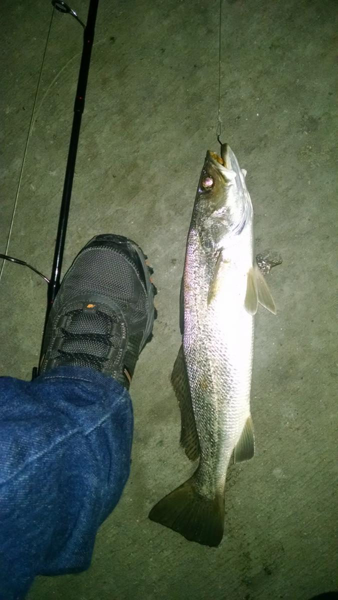 Click image for larger version  Name:sea trout florida.jpg Views:116 Size:116.8 KB ID:107313