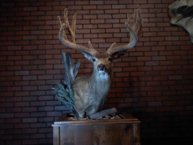 Click image for larger version  Name:Taxidermy Mount.jpg Views:1097 Size:31.8 KB ID:1309
