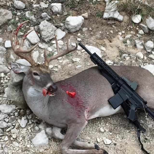 deer w AR
